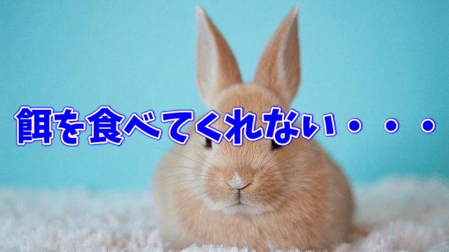 ウサギが餌を食べなくて困った時の我が家の対処法