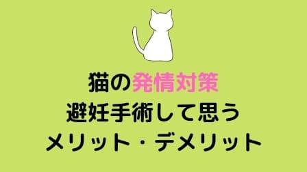 猫の発情対策!避妊手術して思うメリット・デメリット
