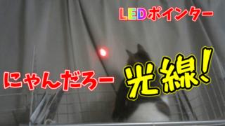 レーザーポインターは危険?目に優しいLEDポインターで猫と遊ぼう!【にゃんだろー光線レビュー】