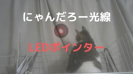 猫のLEDポインターならレーザーポインターより安心して使えるよ