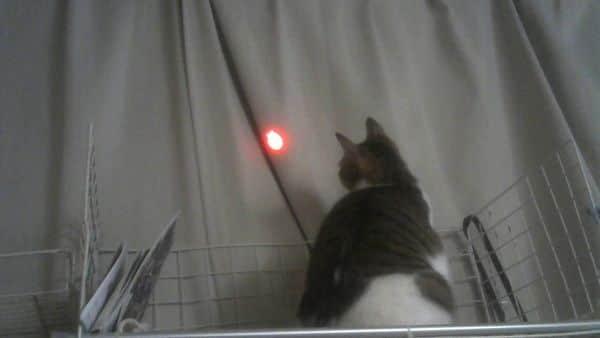 にゃんだろー光線 猫の反応