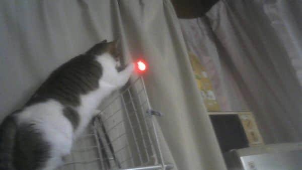 にゃんだろー光線 猫の反応は半々