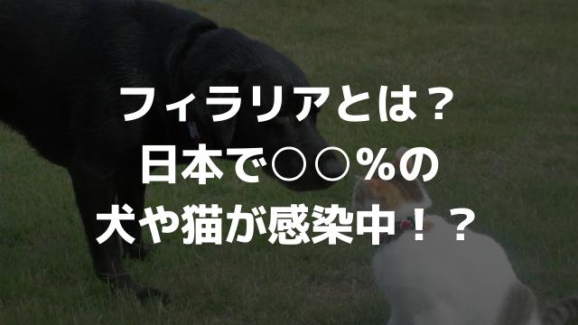 フィラリアとは?日本で○○%の犬や猫が感染中!?