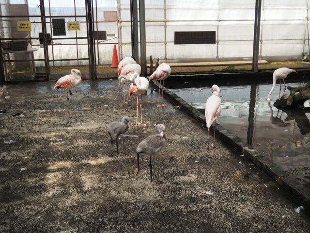 富士花鳥園 フラミンゴ
