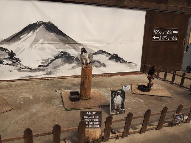 富士花鳥園 鷹
