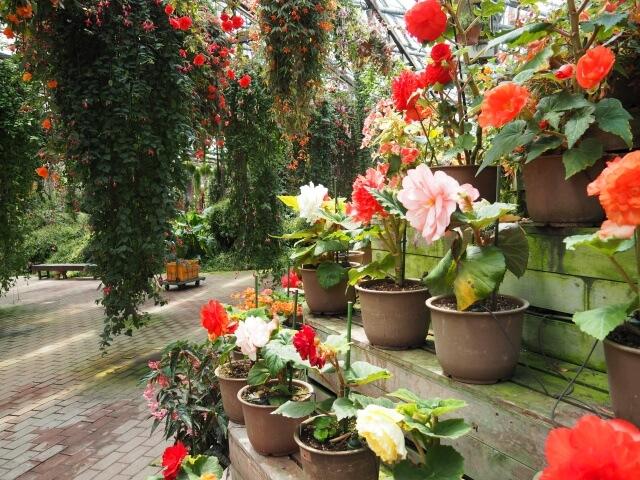 富士花鳥園 色とりどりの花